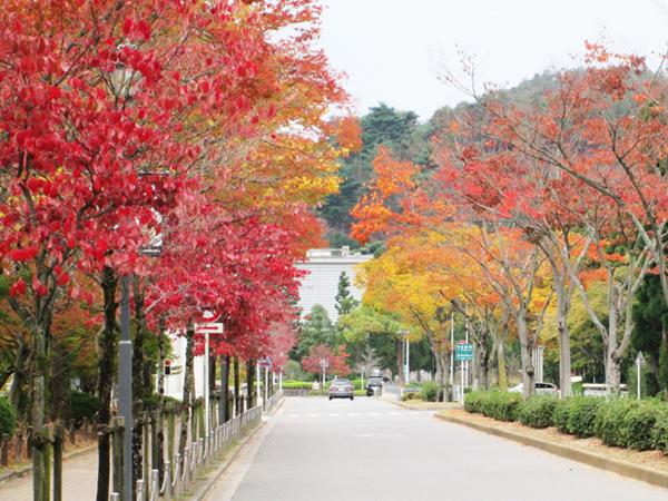 京都宝ヶ池・紅葉