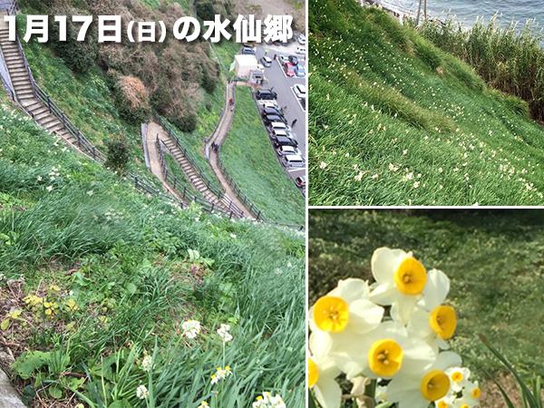 灘黒岩_水仙郷