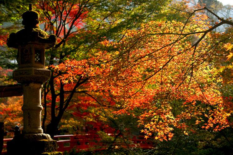 紅葉・嵐山高雄コース イメージ
