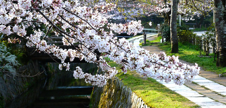 京都・洛東コース イメージ